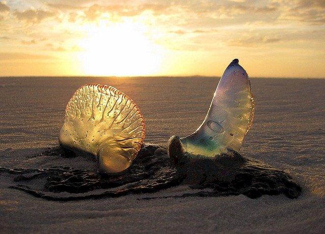 Dve mušle zapichnuté do piesku na pláži, cez ktoré svieti slnko.jpg