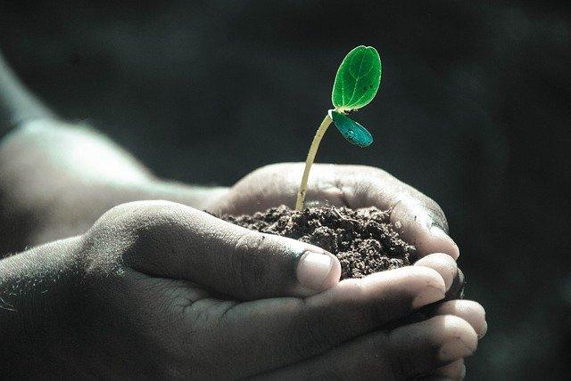 rastlina v rukách.jpg